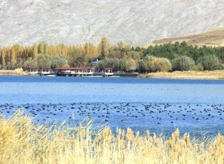 Sivas'ın kuş cenneti Hafik Gölü
